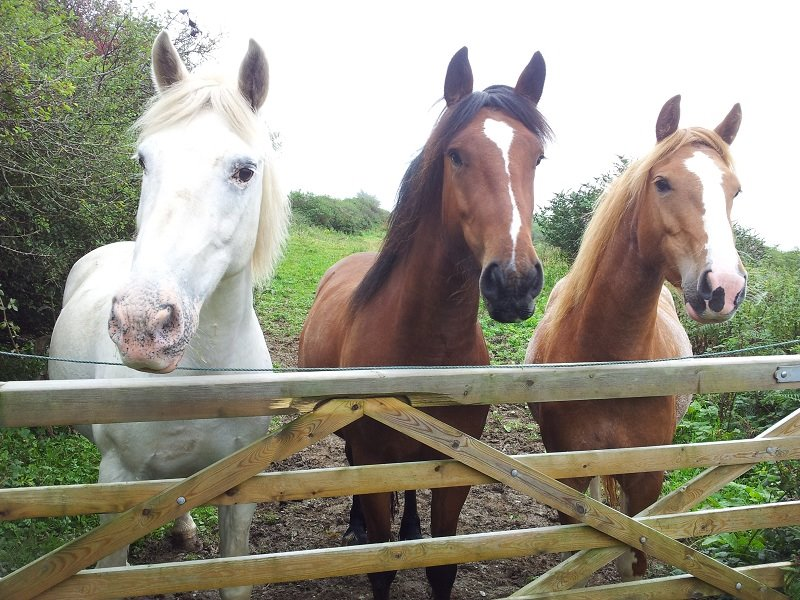 bhs complete guide to horse and stable management
