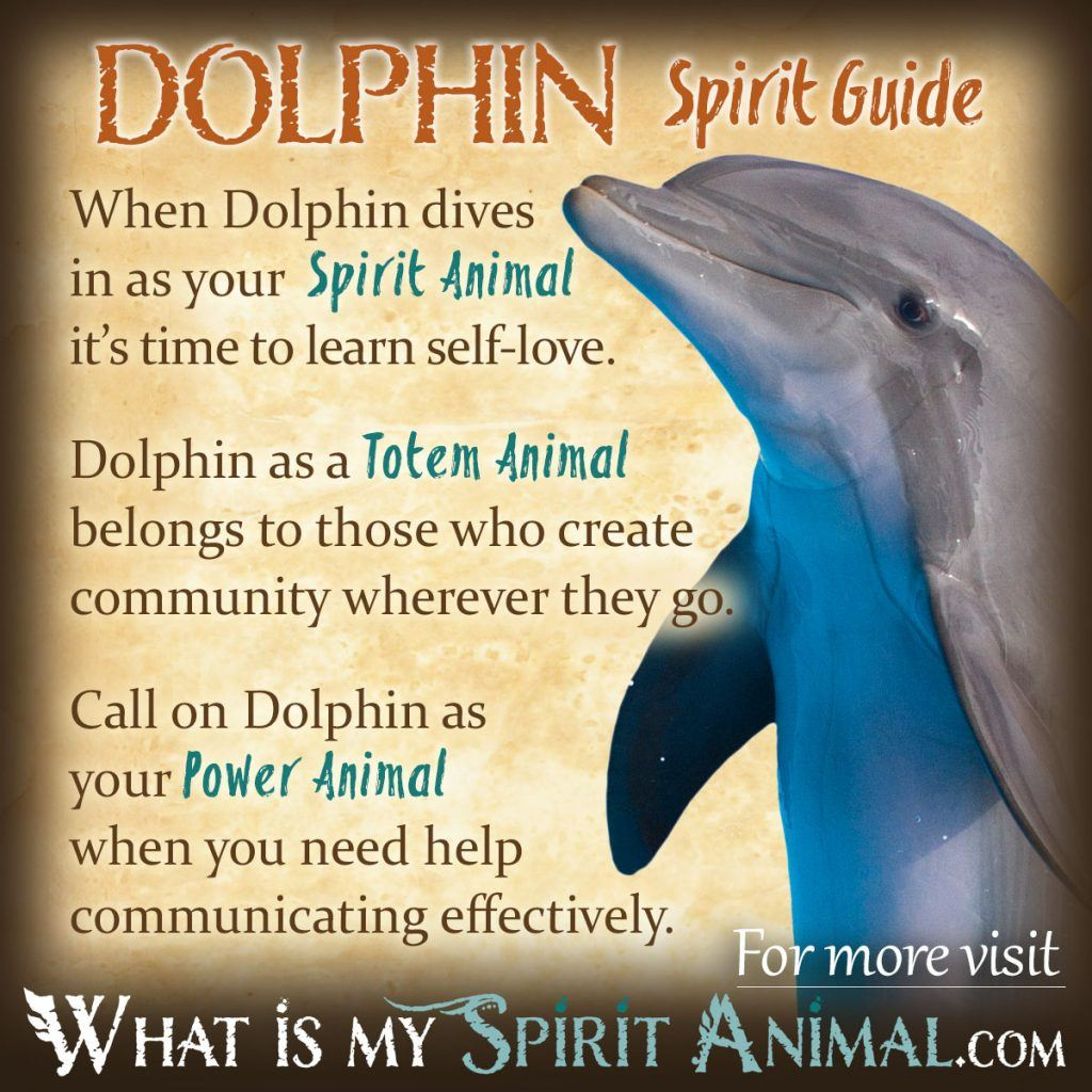 what is my native american animal spirit guide
