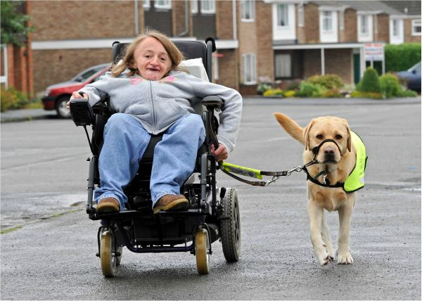 what type of dogs are guide dogs