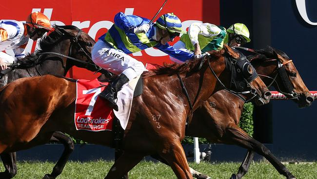 courier mail melbourne cup form guide