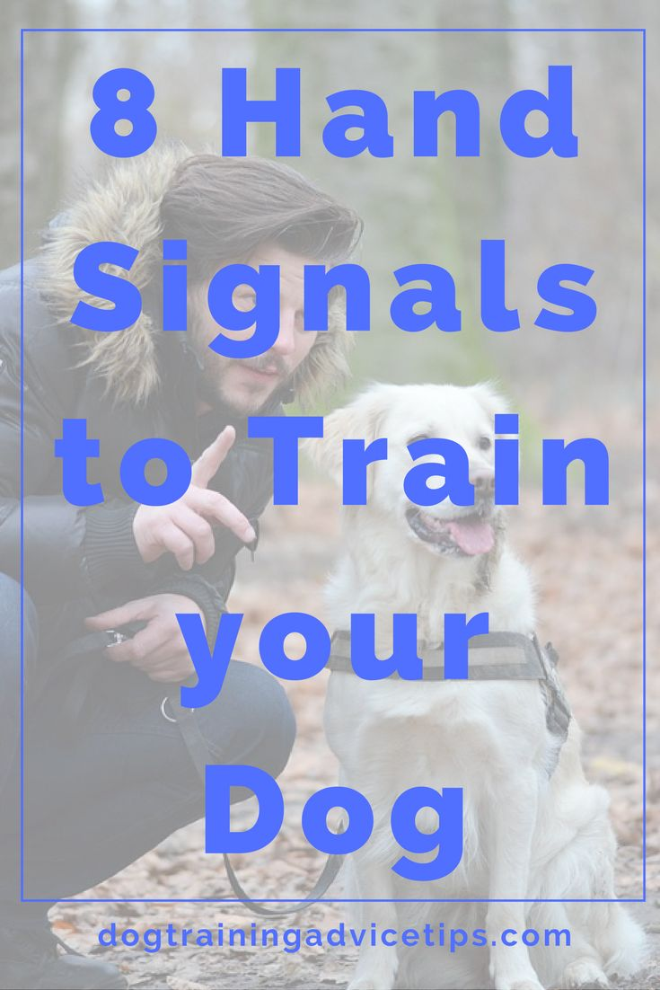 i want to train guide dogs