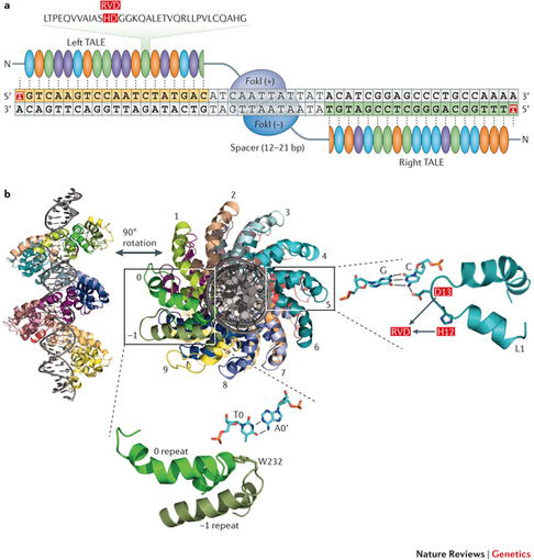 a guide to genome engineering with programmable nucleases