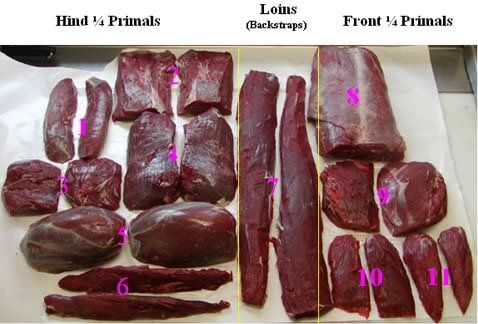 the complete guide to hunting butchering and cooking wild game